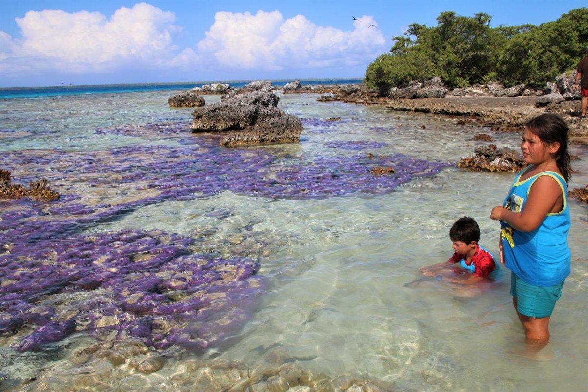 Tikehau : le lagon, le motu, l'île aux oiseaux (motu Puarua)