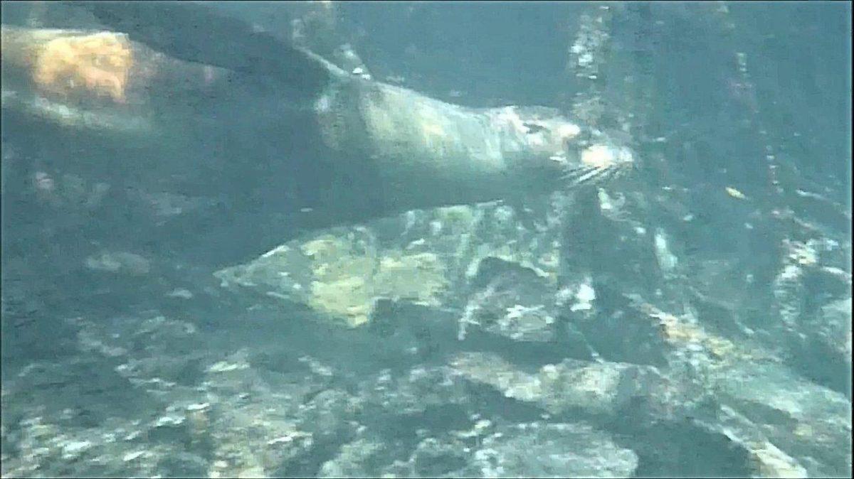 Galápagos : Concha de Perla… nager avec des otaries et des tortues