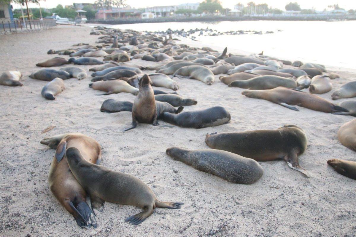 Galápagos : Isla San Cristobal. Rencontre exceptionnelle avec Karine et Sandrine… et aussi avec les otaries !!!