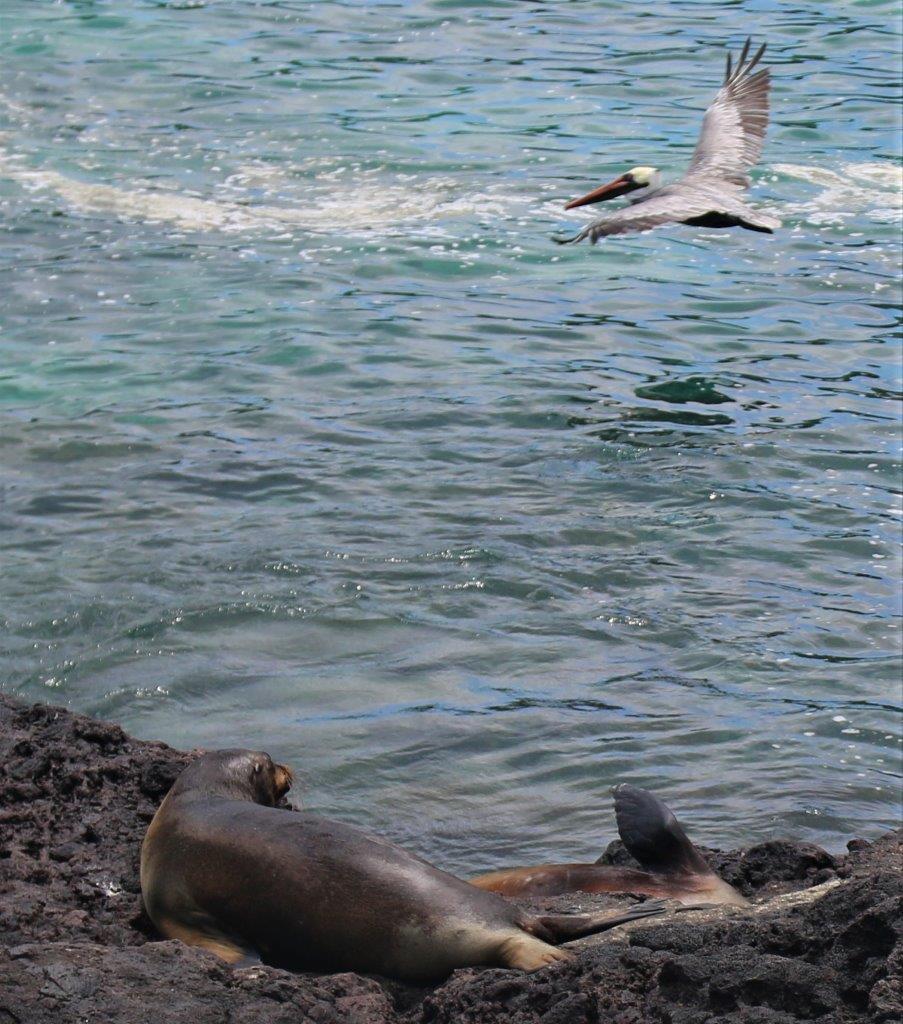 Galápagos : Tijeretas San Cristobal et belle recontre avec Dav Venture