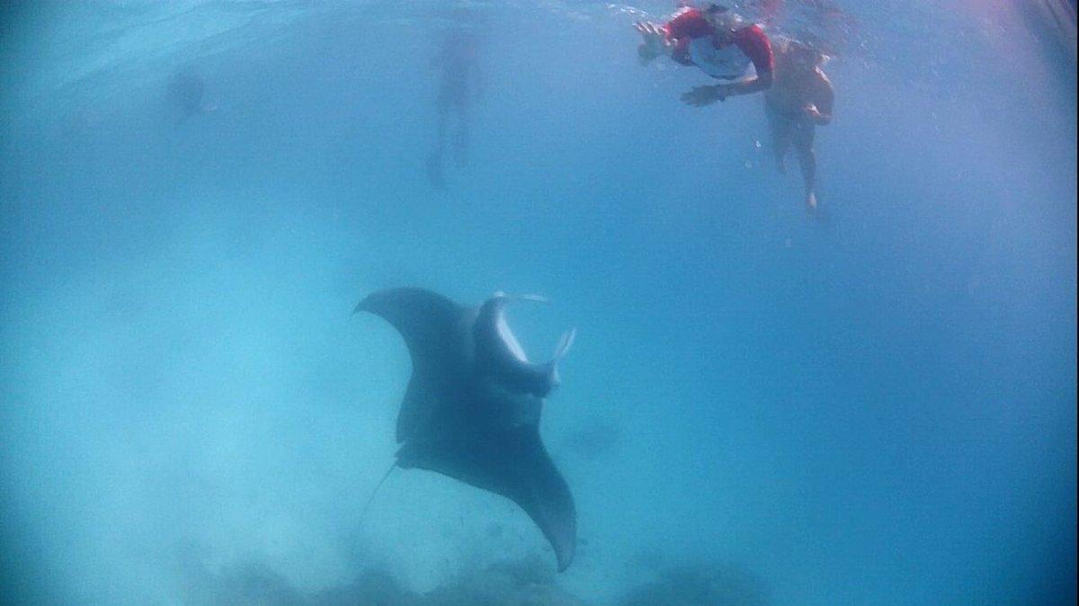 Tikehau : le lagon, les raies mantas, l'île d'Eden