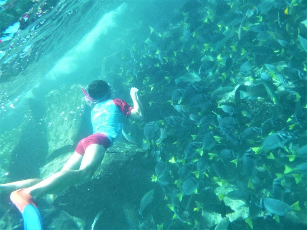 Galápagos : les fonds marins autour de Isla Seymour Norte, et le catamaran